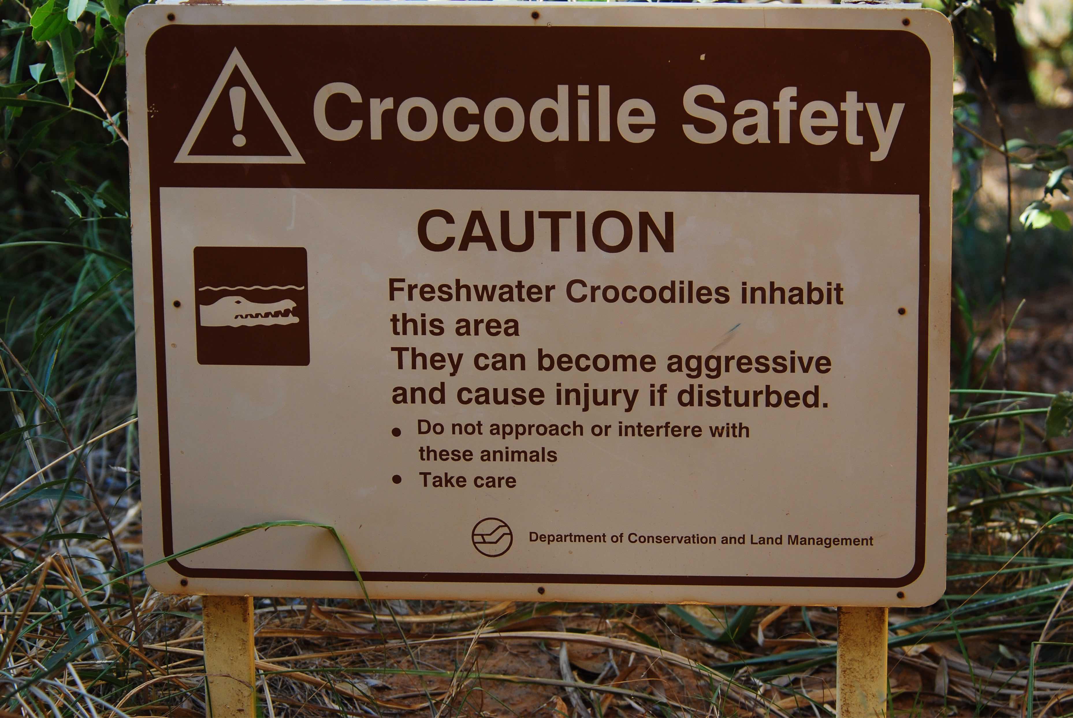 Krokodile in der Bell Gorge