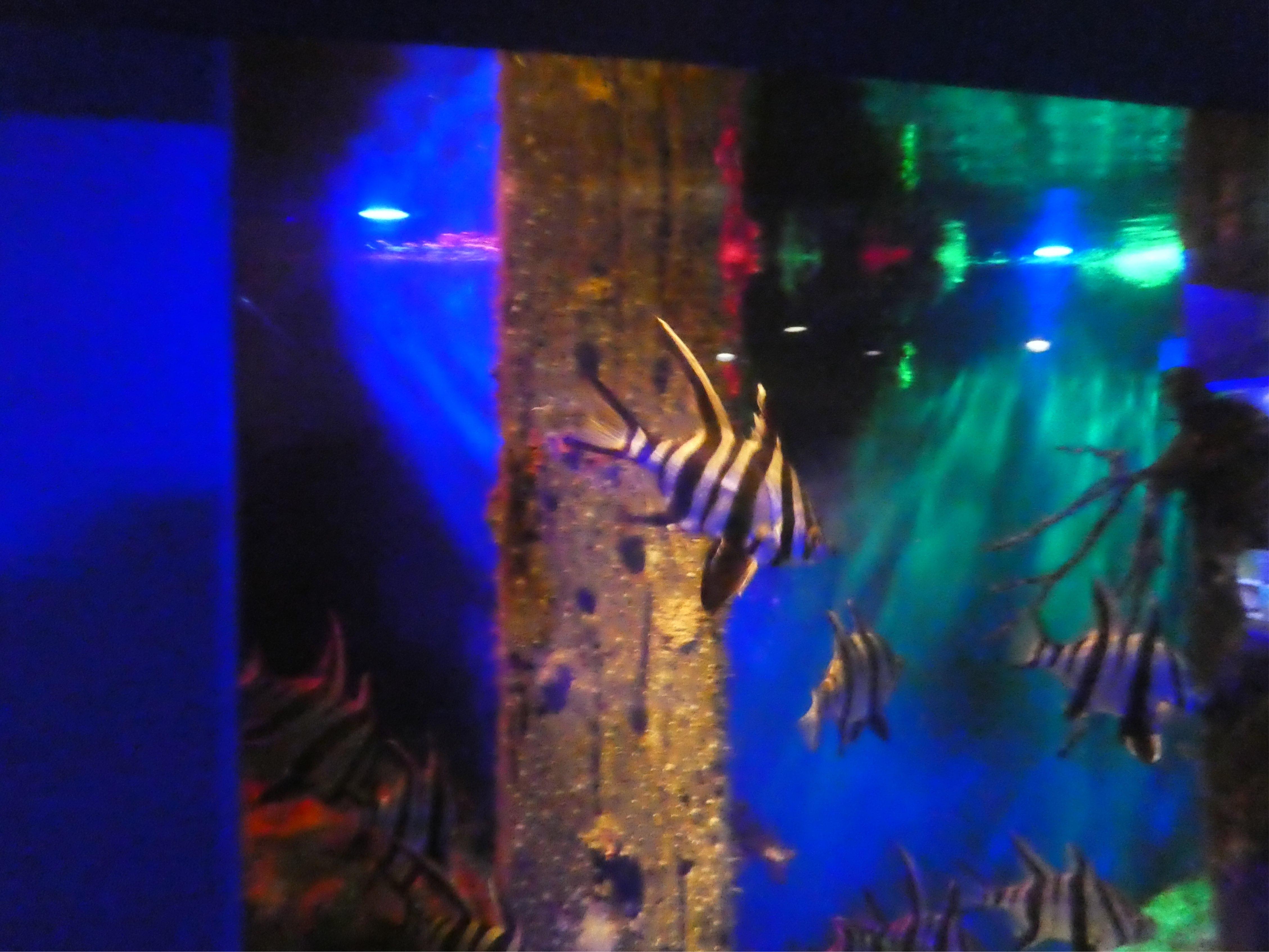 Tropenfische