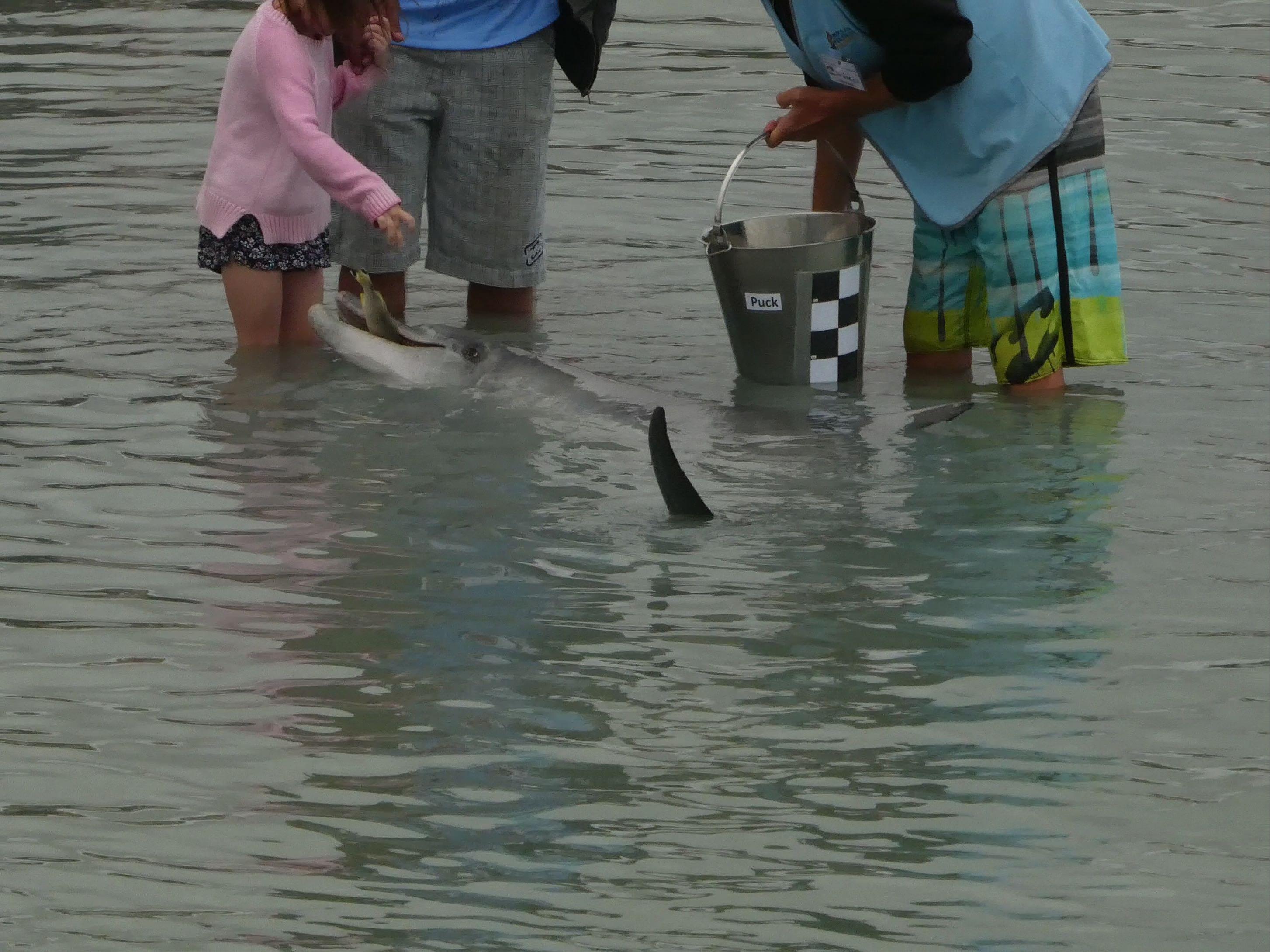 Delfine Fütterung