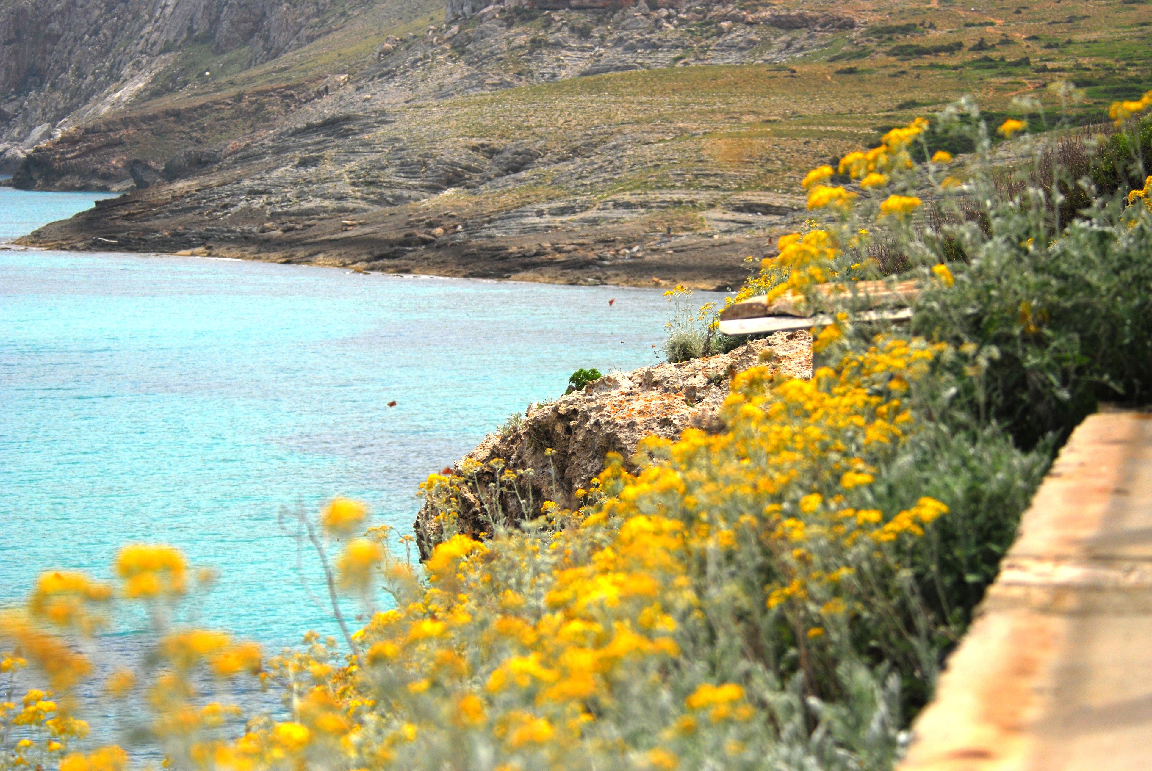 Frühling auf Mallorca
